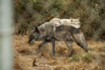 Wolf Haven 09-21-2012-13