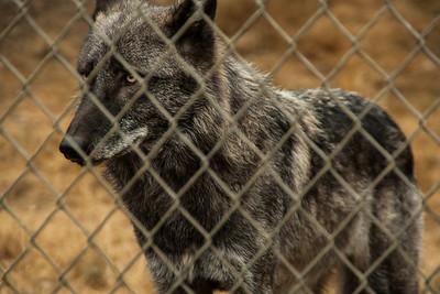 Wolf Haven 09-21-2012-17