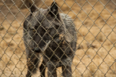 Wolf Haven 09-21-2012-29