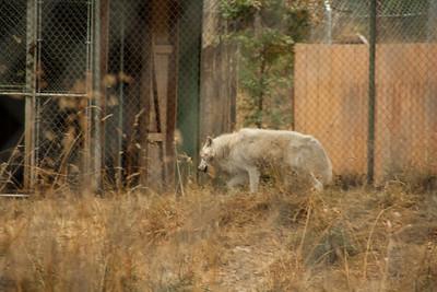 Wolf Haven 09-21-2012-5