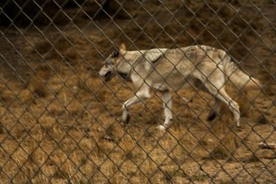 Wolf Haven 09-21-2012-21