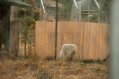 Wolf Haven 09-21-2012-3