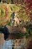 Autumn wolf posing  v