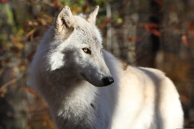 Went to NJ this past weekend.  Enjoyed shooting wolves