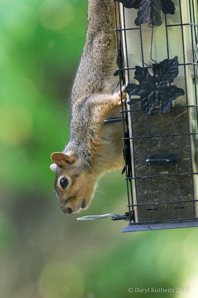 The Working Squirrel
