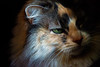 Kitty pictured :: Sophie<br /> <br /> 050912_008502 ICC sRGB 16in x 24in pic