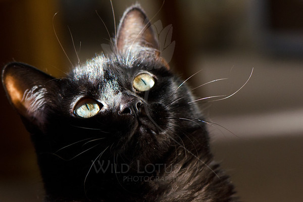Kitty pictured :: Nora<br /> <br /> 050912_008425 ICC sRGB 16in x 24in pic