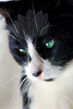 Kitty pictured :: Shannon<br /> <br /> 050612_008110 ICC sRGB 16in x 24in pic