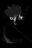 Maleficent the Kitty...<br /> <br /> 020112_005711 ICC adobe 16in x 24in pic 20in x 30in matte