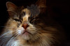 Kitty pictured :: Sophie<br /> <br /> 050912_008504 ICC sRGB 16in x 24in pic