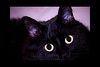 Seeing You<br /> <br /> Kitty pictured :: Tabitha<br /> <br /> 010512_002713 ICC adobe 6in x 9in matte