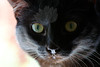 Kitty pictured :: Nora<br /> <br /> 050612_008107 ICC sRGB 16in x 24in pic