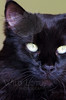 Kitty pictured :: Cleo<br /> <br /> 042912_007630 ICC sRGB 16in x 24in pic
