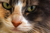 Kitty pictured :: Sophie<br /> <br /> 050612_008071 ICC sRGB 16in x 24in pic