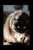 Kitty pictured :: Maggie<br /> <br /> 012512_004574 ICC adobe 16in x 24in pic 20in x 30in matte