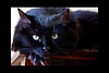 The View Of A Mouse....<br /> <br /> Kitty pictured :: Maggie<br /> <br /> 012512_004585 ICC adobe 16in x 24in pic 20in x 30in matte
