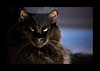 """""""Well I AM the Empress of the Universe....""""<br /> <br /> Kitty pictured :: Cleo"""