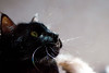 Kitty pictured :: Maggie<br /> <br /> 042312_006979 ICC sRGB 16in x 24in pic
