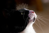 Kitty pictured :: Shannon <br /> <br /> 050912_008429 ICC sRGB 16in x 24in pic
