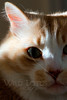 Kitty pictured :: Max<br /> <br /> 041312_005330 ICC sRGB 16in x 24in pic