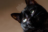 Kitty pictured :: Nora<br /> <br /> 050912_008435 ICC sRGB 16in x 24in pic