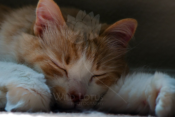 Kitty pictured :: Max<br /> <br /> 051412_009032 ICC sRGB 16in x 24in pic