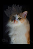 Kitty pictured :: Max<br /> <br /> DSC_9086 ICC adobe 16in x 24in pic 20in x 30in matte
