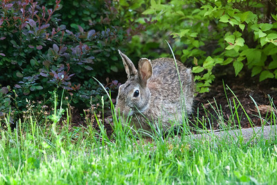Critters in our yard