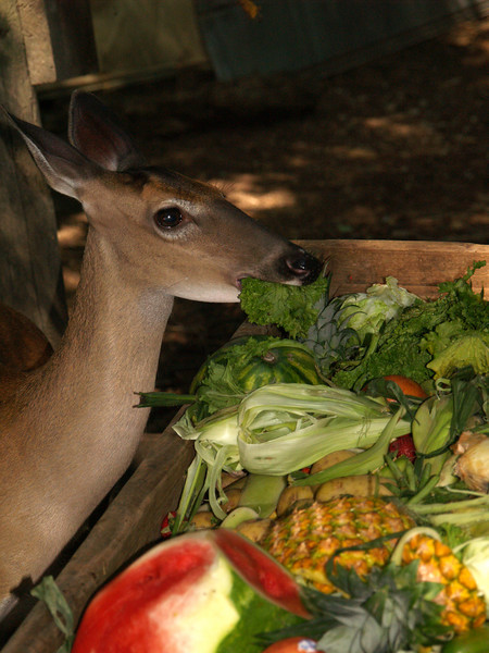 The deer buffet bar!  They had two huge wooden trays, maybe 8 x 12 ft?, covered with assorted fruits, greens and veggies for the deer.