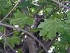 The Brave Jungle Cat!