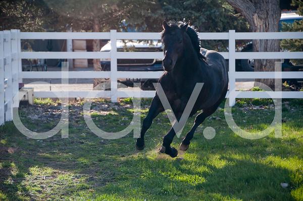 Yoeny's Horse