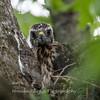 Hawk-June-20178554
