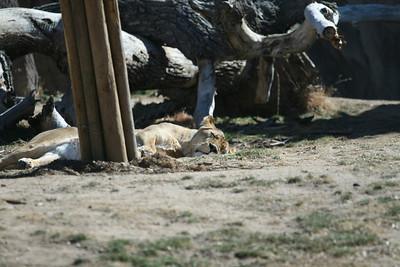 Zoo 3.3.09