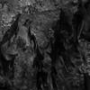 Chauve souris (la roussette d'Egypte) - Zoo d'Amnéville