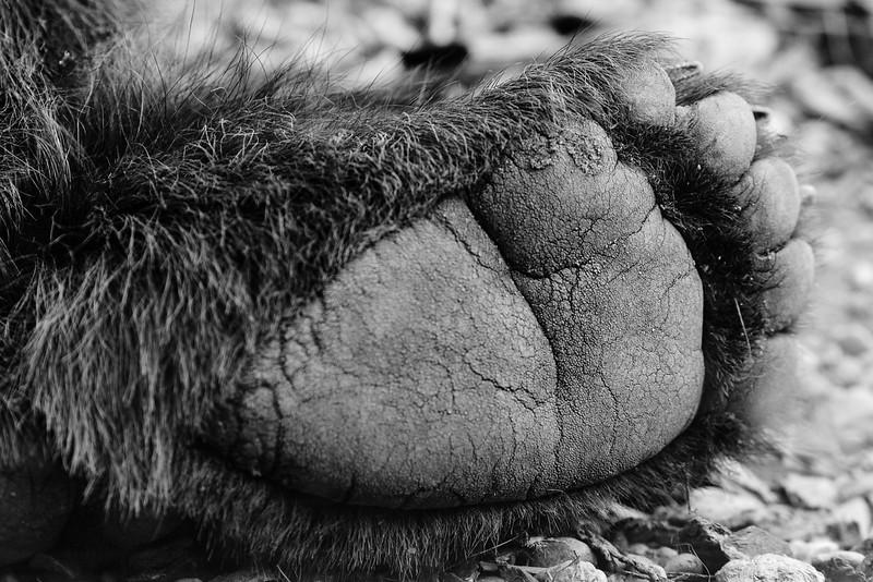 Ourse brun - Zoo d'Amnéville