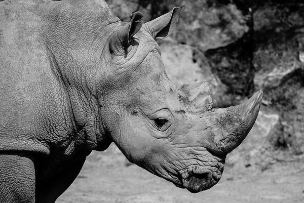 Rhinocéroce - Zoo d'Amnéville