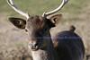 African Wildlife Safari 037