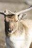 African Wildlife Safari 022