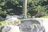 Zoo Trip 039