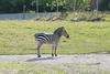 Zoo Trip 067