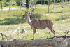 Zoo Trip 069