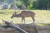 Zoo Trip 072