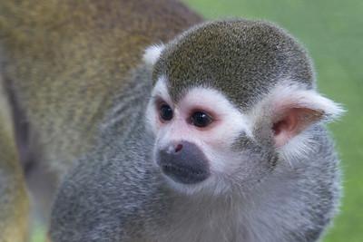 No Monkeying Around