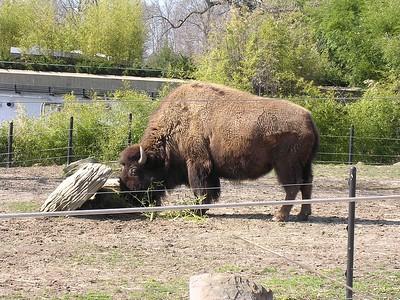 National Zoo - April 2004