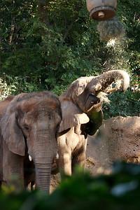 Atl Zoo_IMG_1783