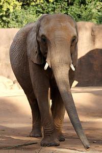 Atl Zoo_IMG_1774