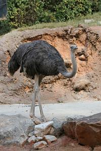 Atl Zoo_IMG_1683