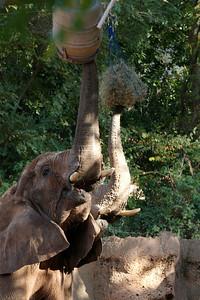 Atl Zoo_IMG_1770