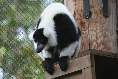 Atl Zoo_IMG_1699