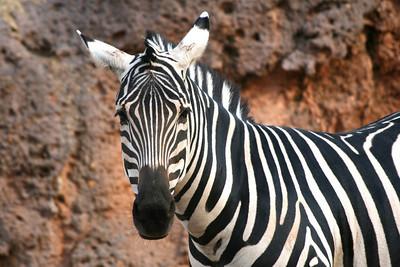 Atl Zoo_IMG_1685_2